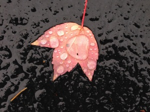 Red Leaf with droplets